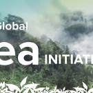 Global Tea Initiative starts at UC Davis
