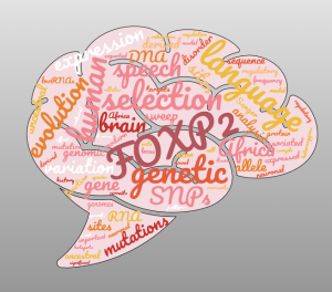 Illustration of brain with words overlaid, including FOXP2, evolution, speech and language.