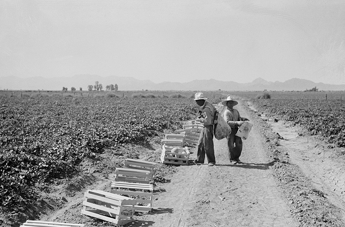 Photo: workers in a field