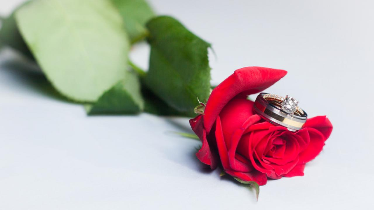 Photo: rose and rings