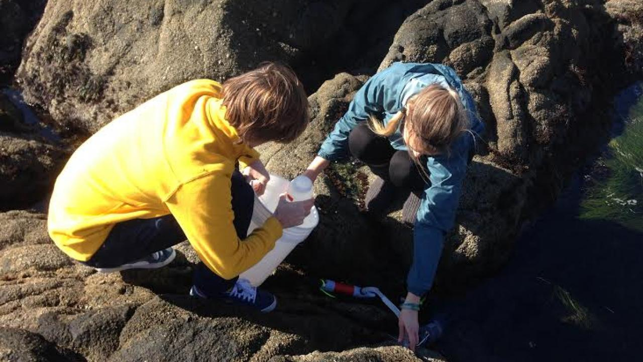 Lester Kwiatkowski and Yana Nebuchina taking samples from a rocky tide pool.