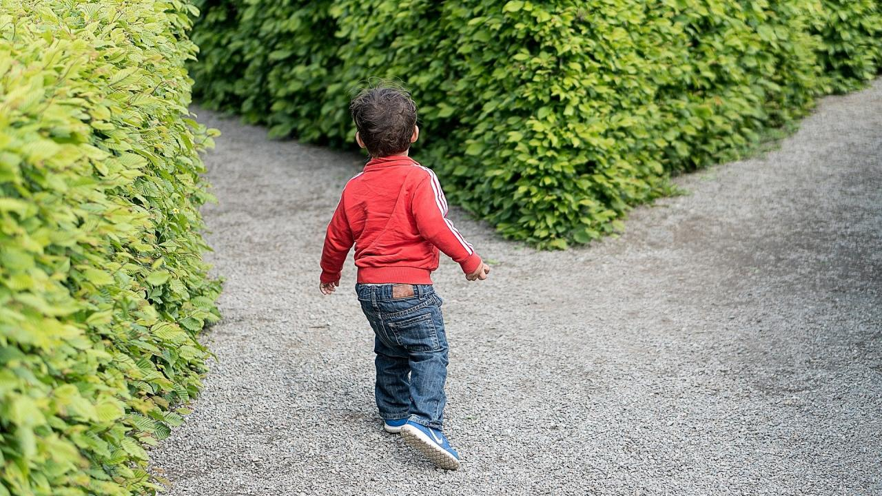 Young child at a Y in a garden path