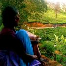 Photo: woman overlooking tea field