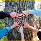 picture of five hands touching tree trunk