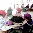 women sorting tea in china.