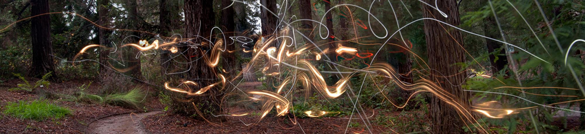 Photo: squiggles of light along path in the UC Davis arboretum's redwood grove